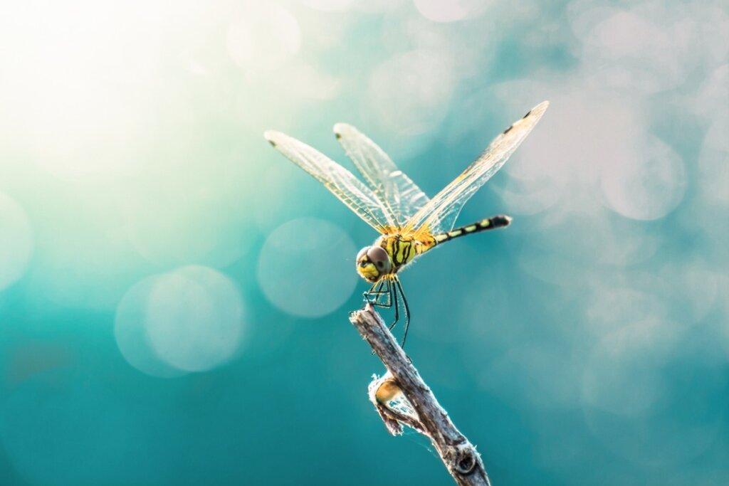 9 datos curiosos sobre las libélulas