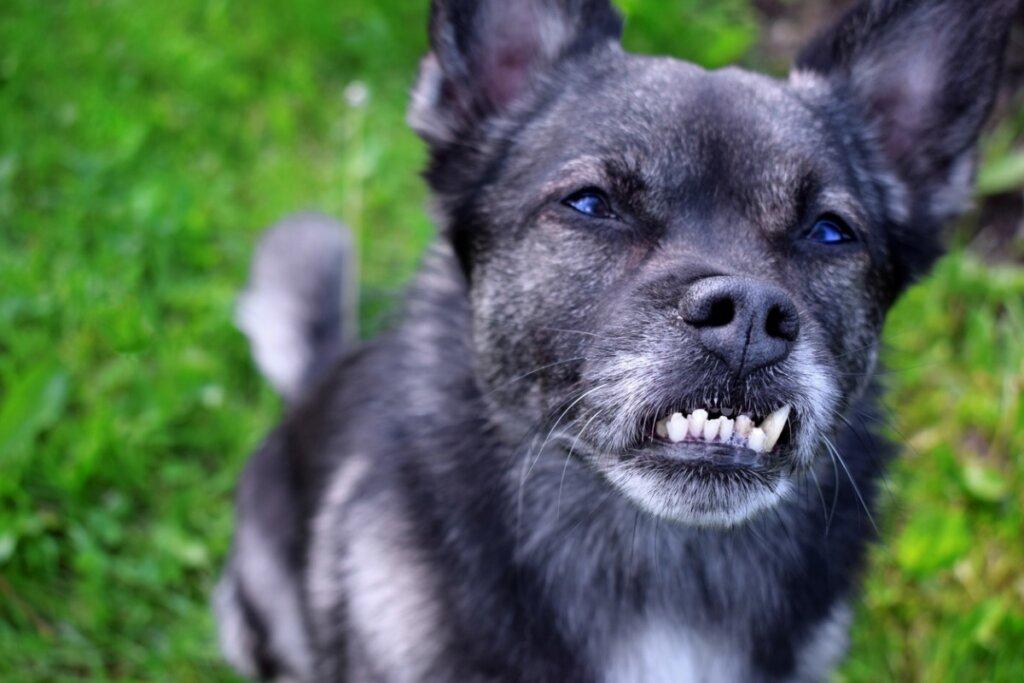 Maloclusión dental en perros: causas, consecuencias y tratamientos