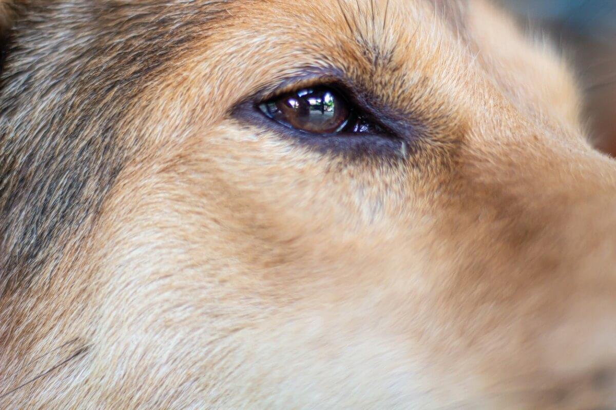 Los ojos de un perro.
