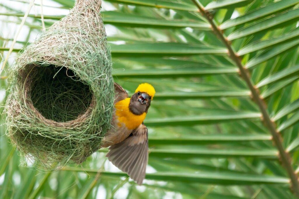 6 animales que construyen sus propias casas