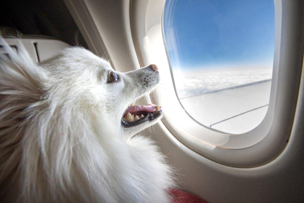 ¿Qué razas de perros no pueden viajar en avión?