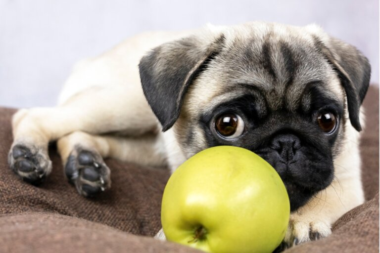 ¿Los perros pueden comer manzana?