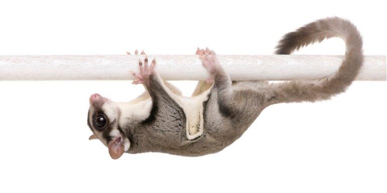 Las 6 mascotas más raras del mundo