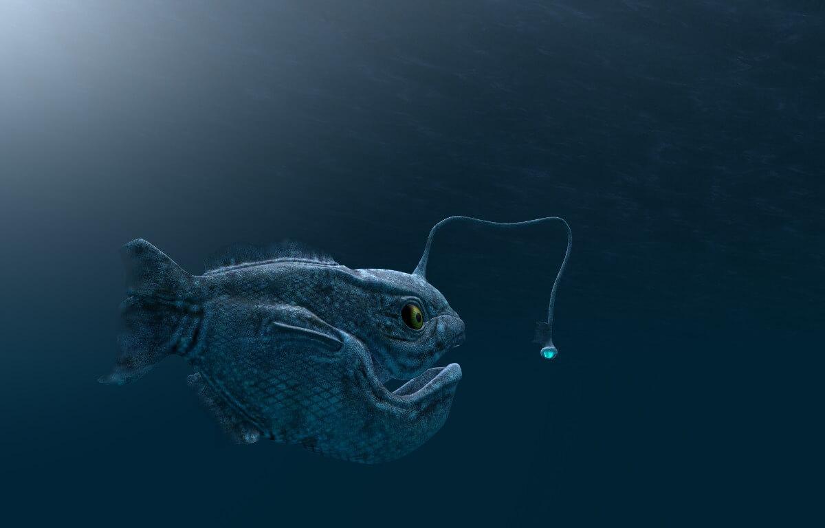 Een diepzeevis met een bijzondere vorm