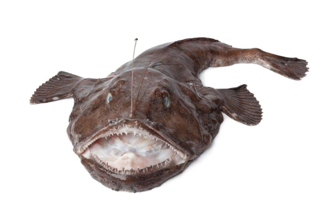 Peces abisales, unas criaturas marinas increíbles