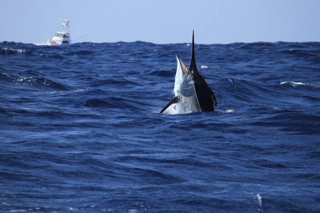 Los 7 peces más rápidos del mundo