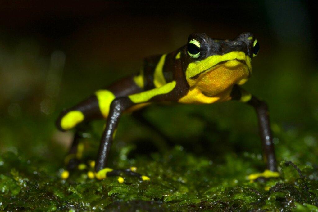 6 animales extintos en la última década