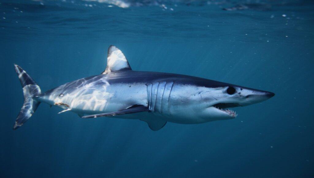 Los 11 animales más rápidos del océano