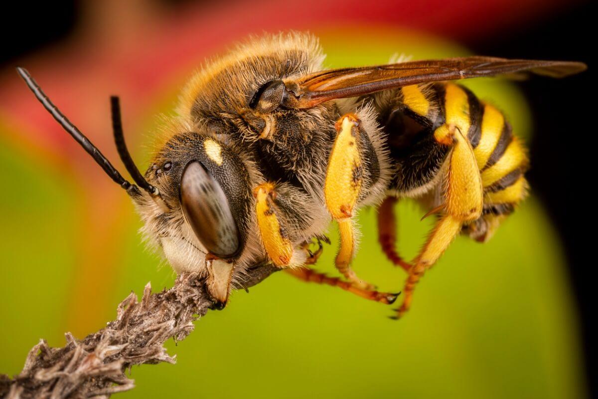 Un altro dei tipi di api.