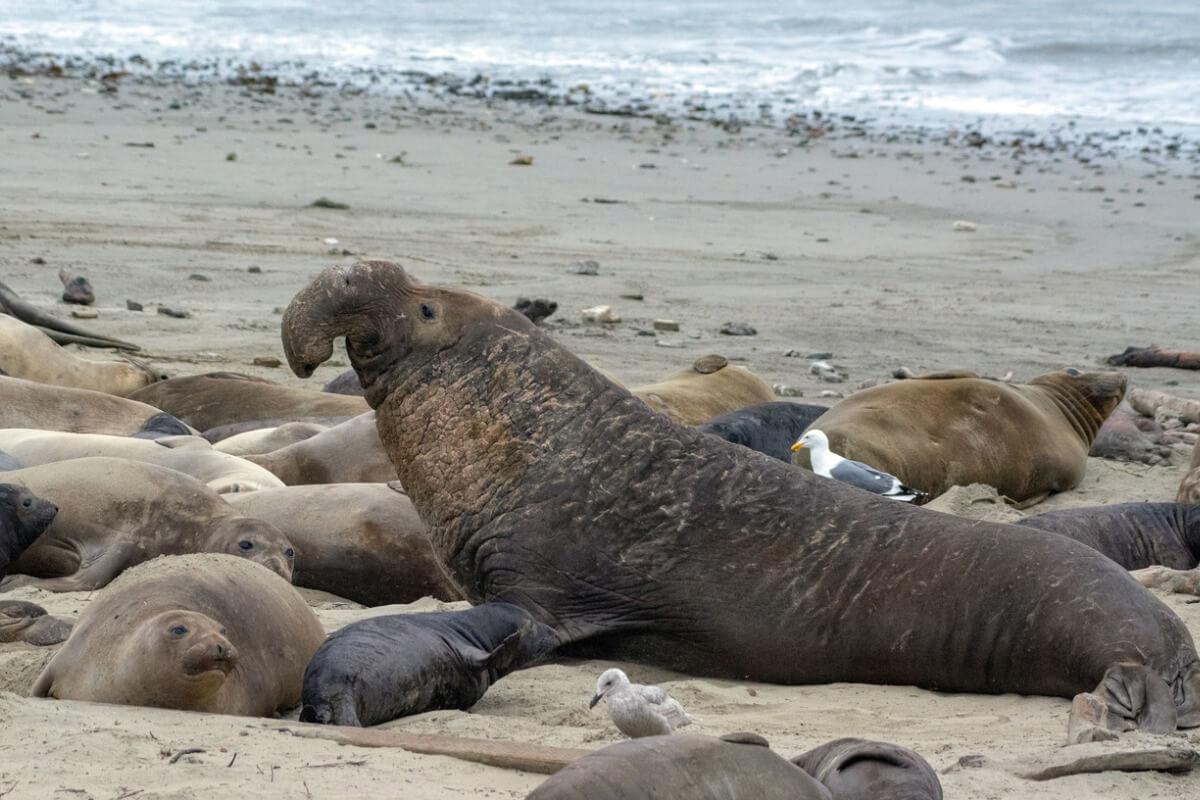 Una de las especies de focas.