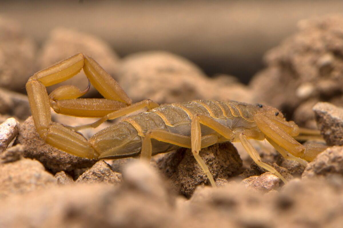 Un escorpión sobre la arena.