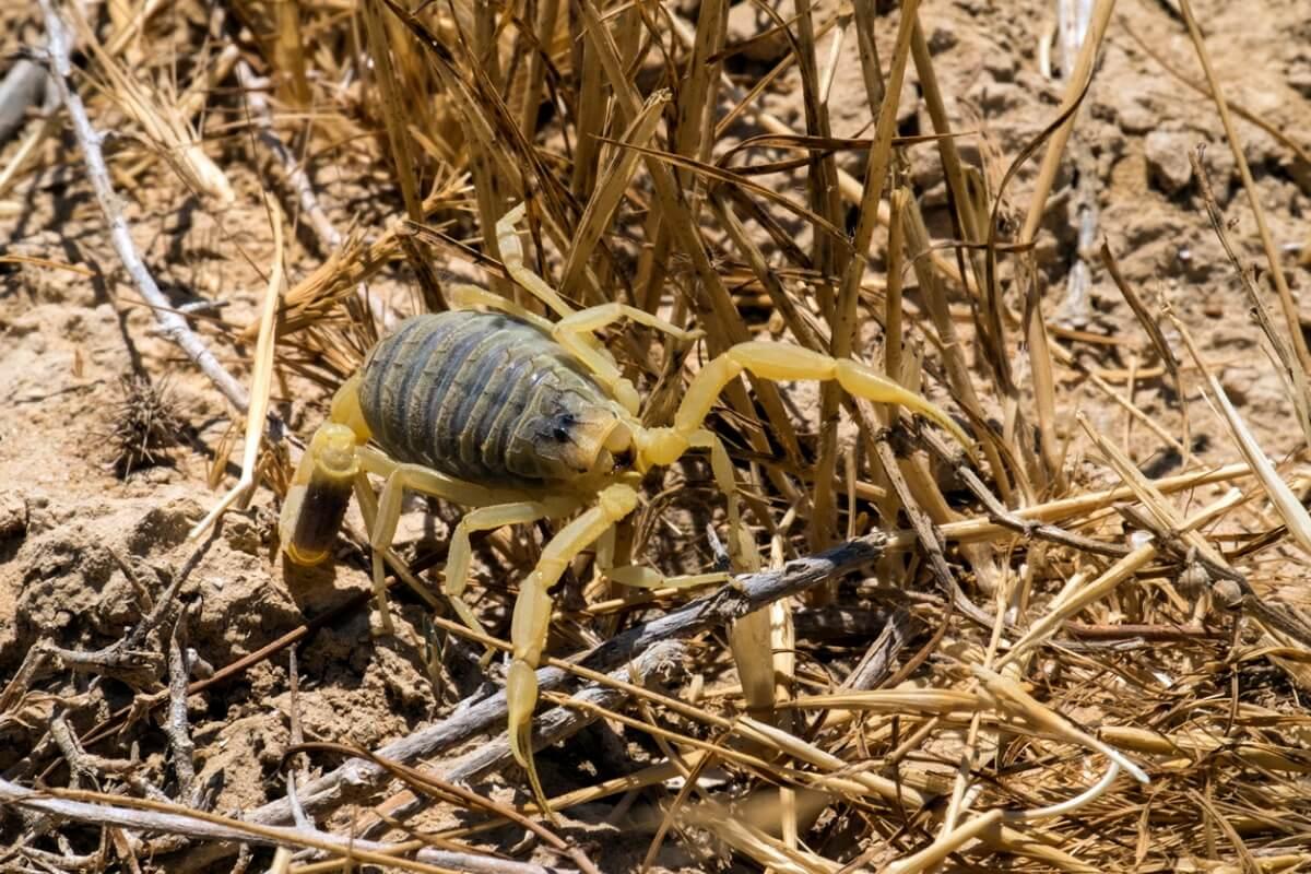 Un escorpión sobre un arbusto.