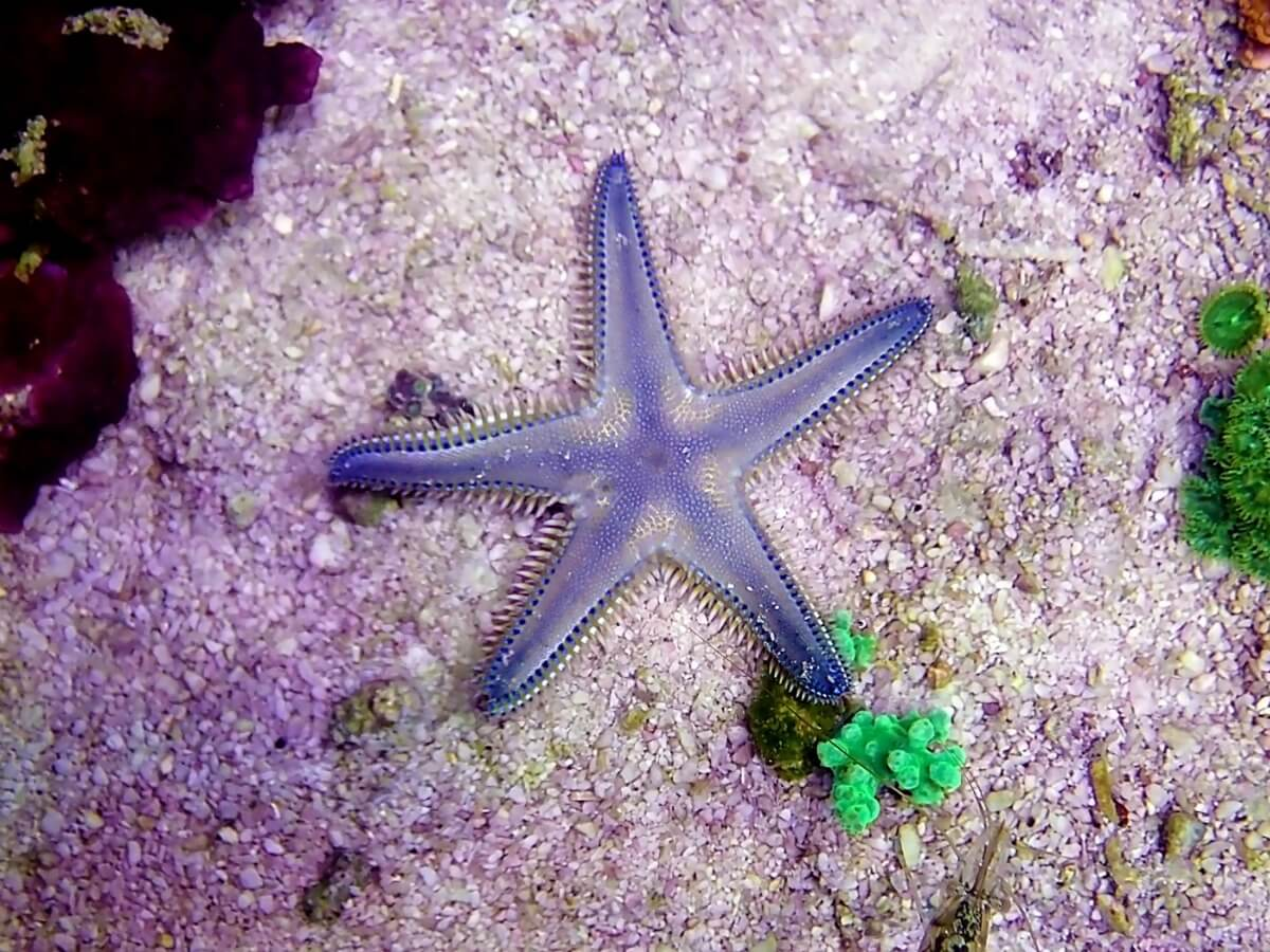 One of a kind of starfish.