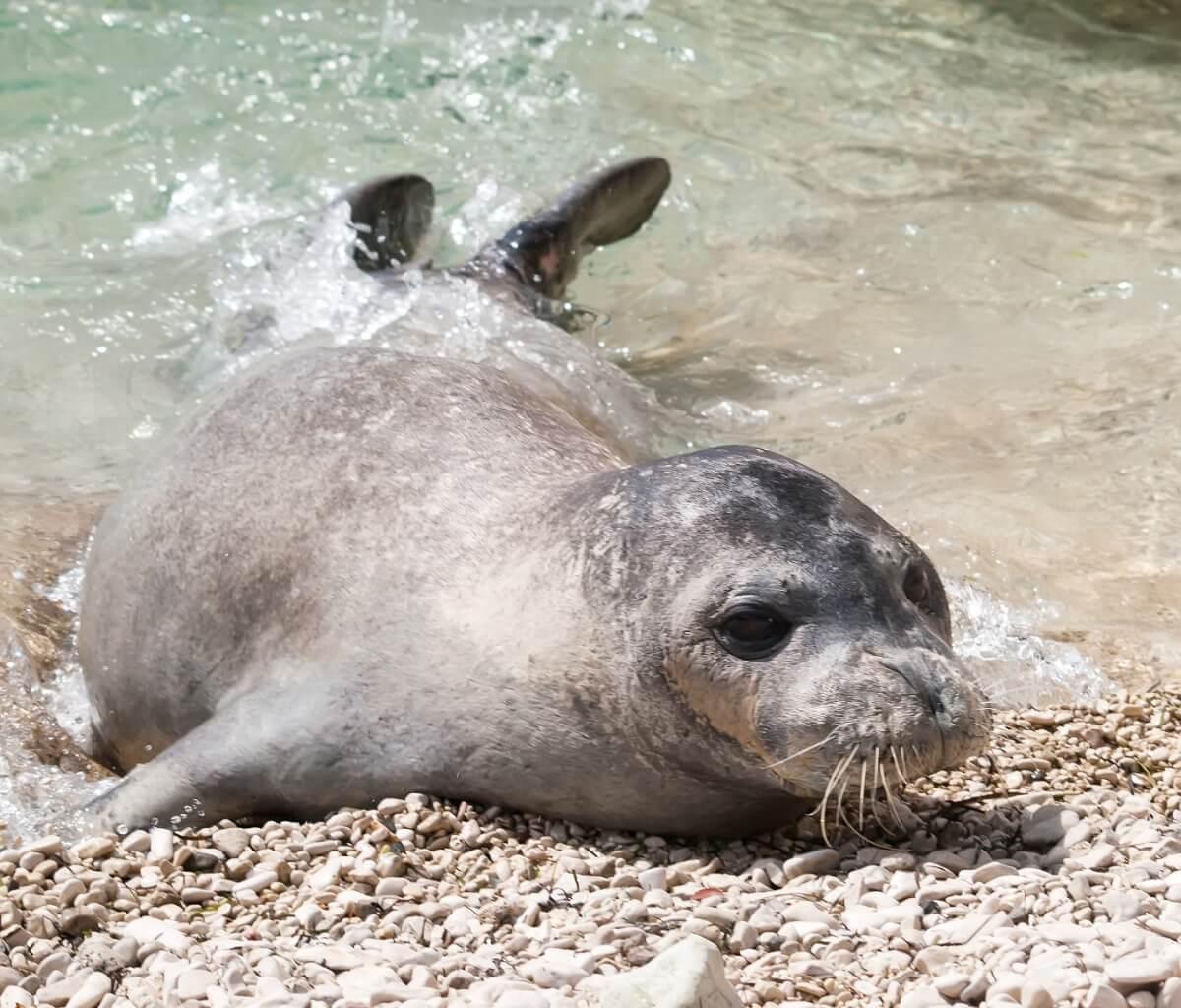 Een zeehond