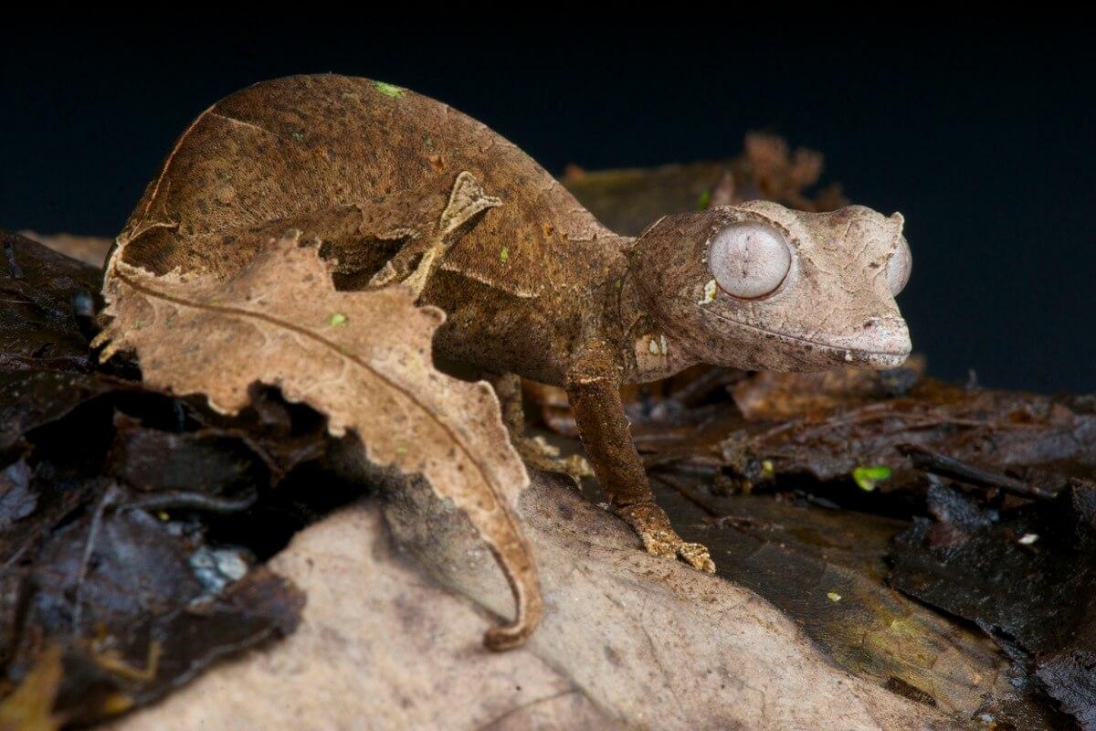 Uno de los animales más raros de Madagascar.