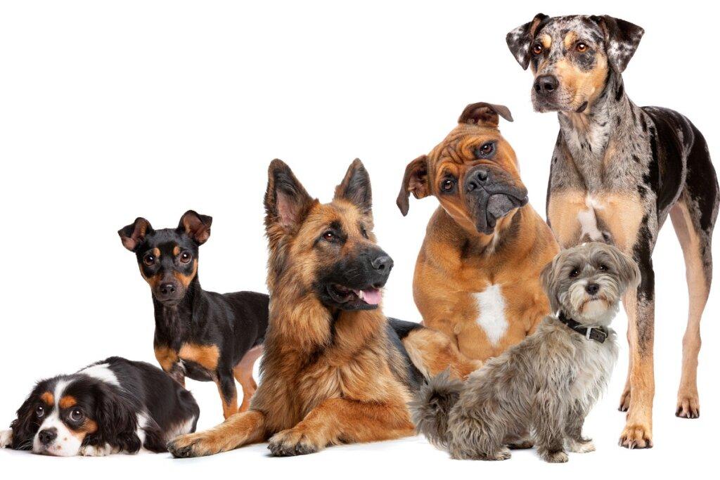 Origen, evolución y comportamiento del perro