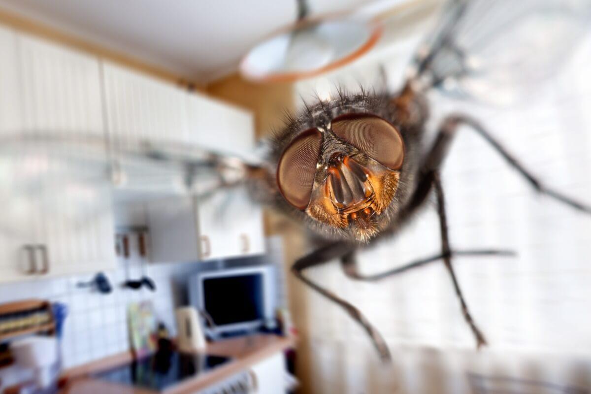 La visione delle mosche e altri segreti.