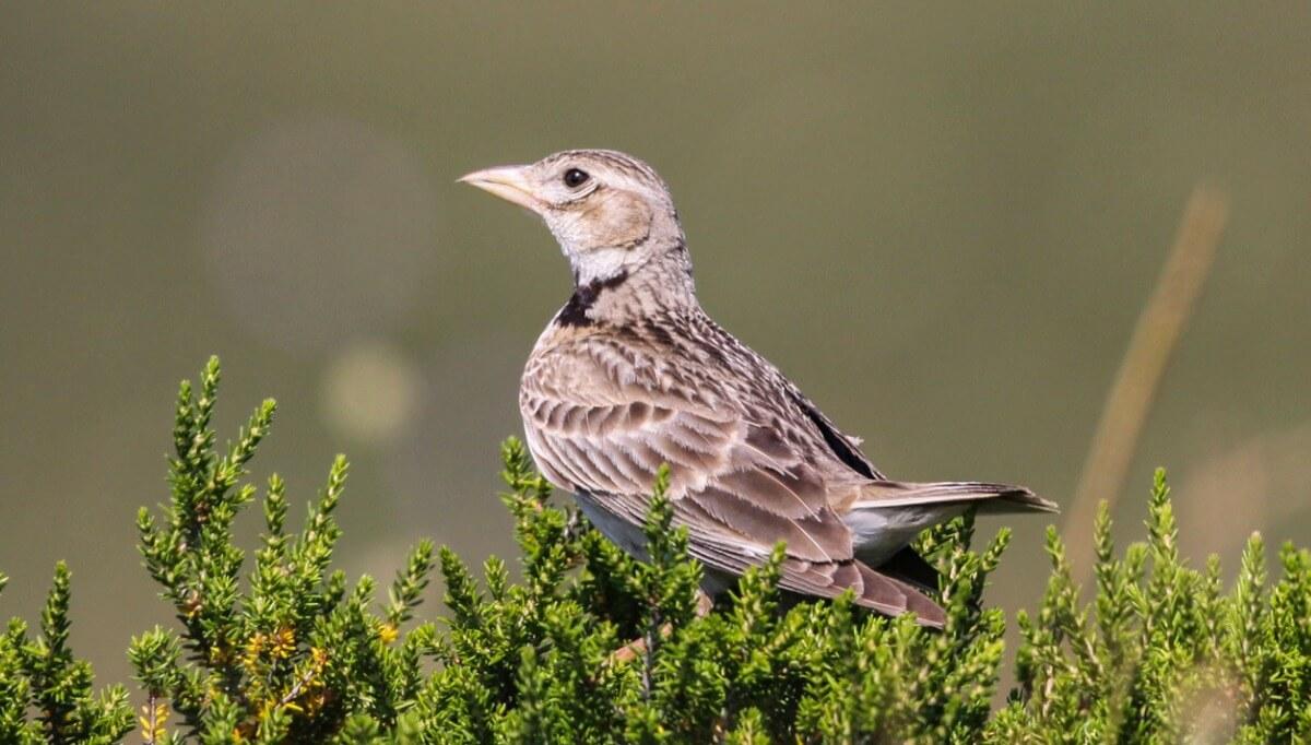 Gli uccelli del calendario sono animali che mangiano solo frutta.