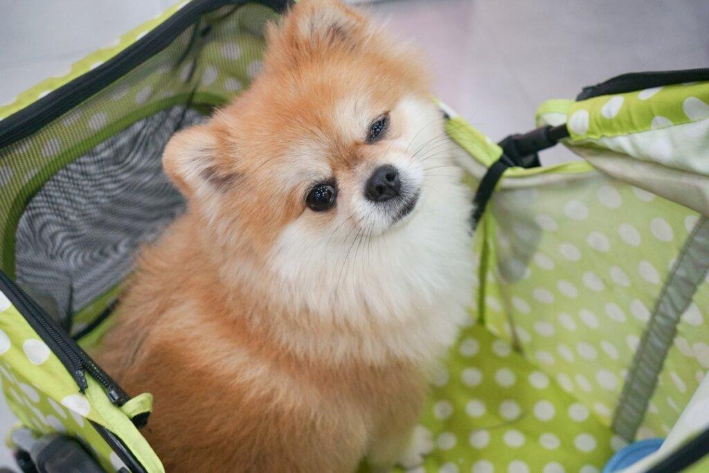 Guarderías para perros: ventajas y desventajas