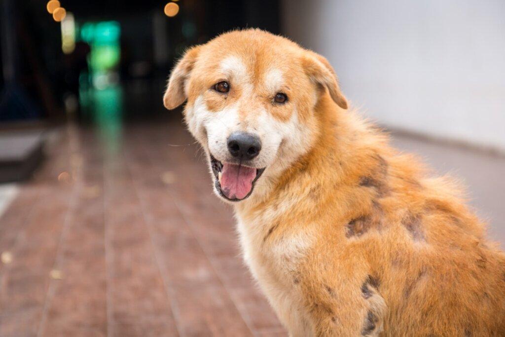 Pénfigo en perros: síntomas, causas y tratamiento
