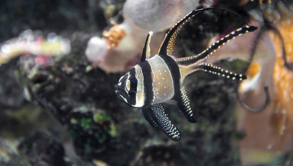 Un pesce molto speciale in un acquario.