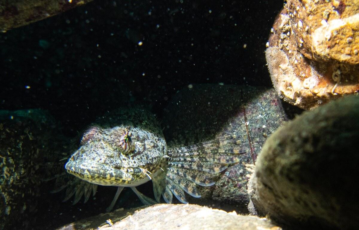 Un pesce sopra una grotta