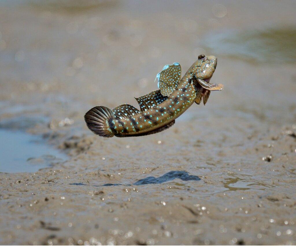 7 peces que respiran fuera del agua