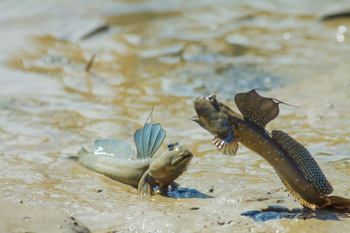 Una lotta tra tramogge di fango.