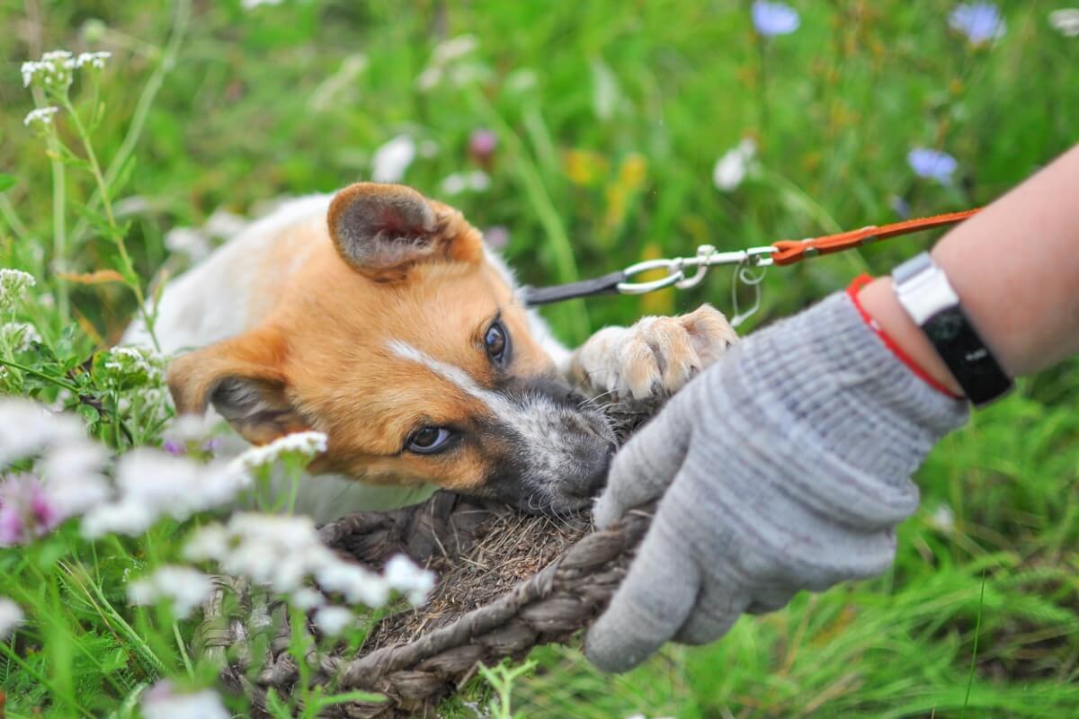 Síndrome del perro aspirador: todo lo que necesitas saber