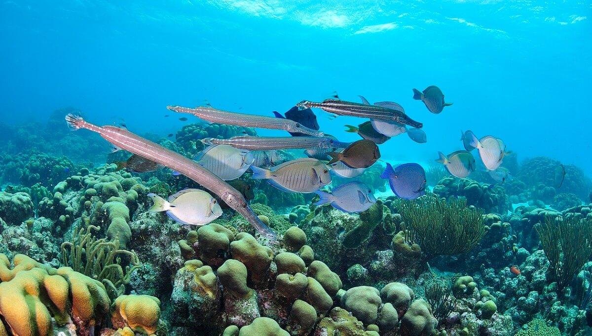 Un gruppo di pesci su una scogliera.
