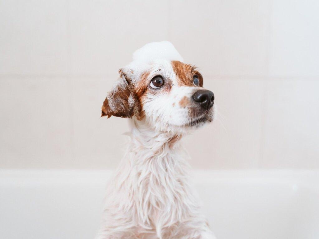 Primer baño del cachorro: ¿cuándo y cómo hacerlo?