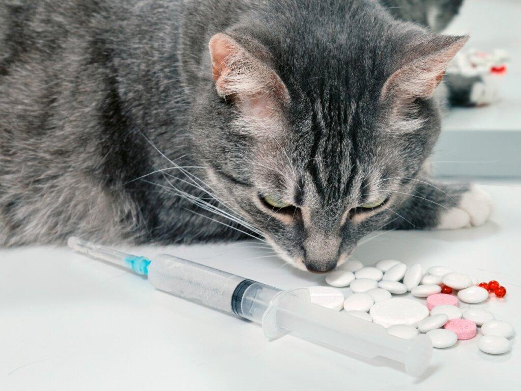 Cefalexina para gatos: usos y efectos secundarios