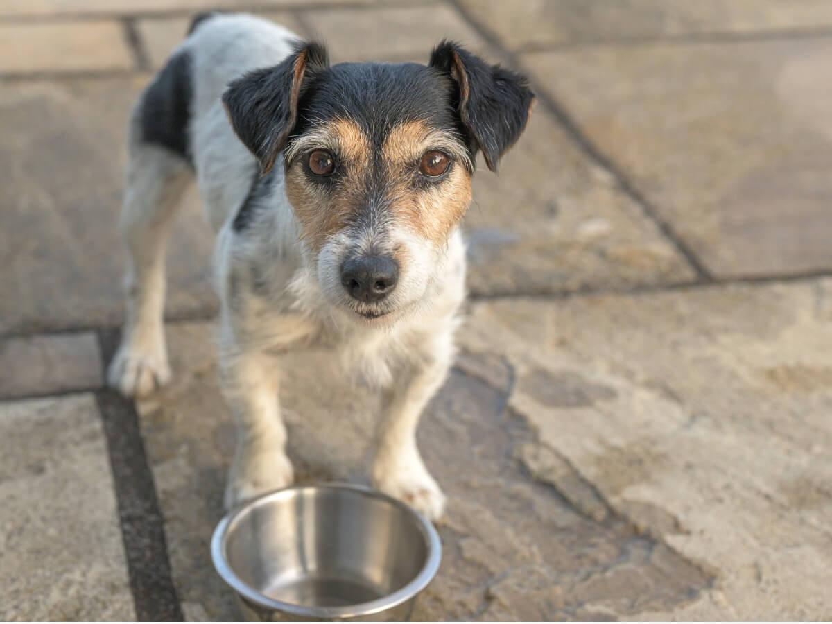 10 síntomas de desnutrición en perros