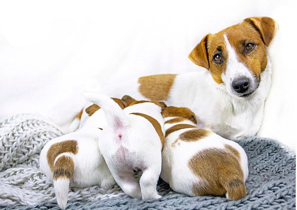 5 claves para el destete de perritos