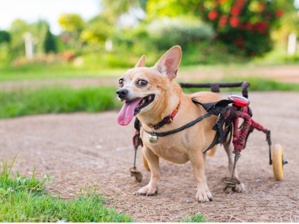 Ortopedia para perros: todo lo que necesitas saber