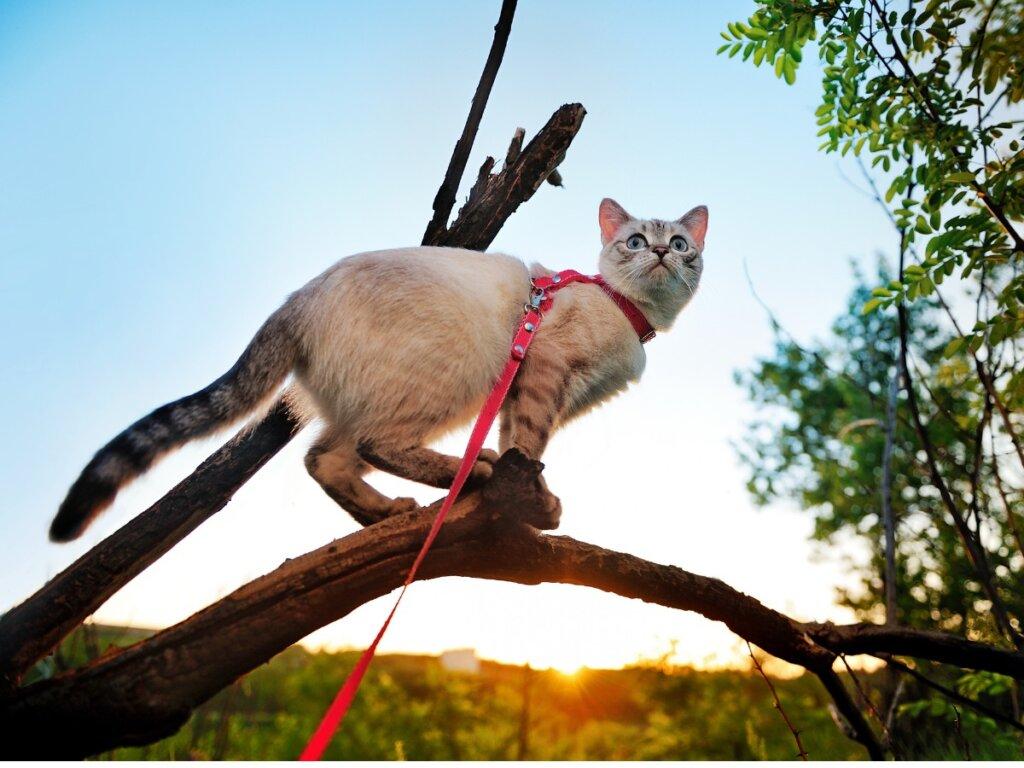 5 consejos para pasear a tu gato