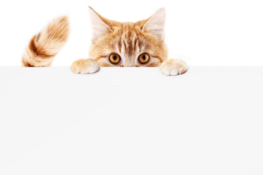 ¿Por qué mi gato se persigue la cola?