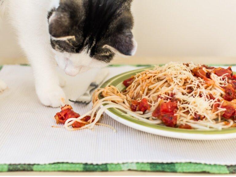 ¿Los gatos pueden comer pasta?