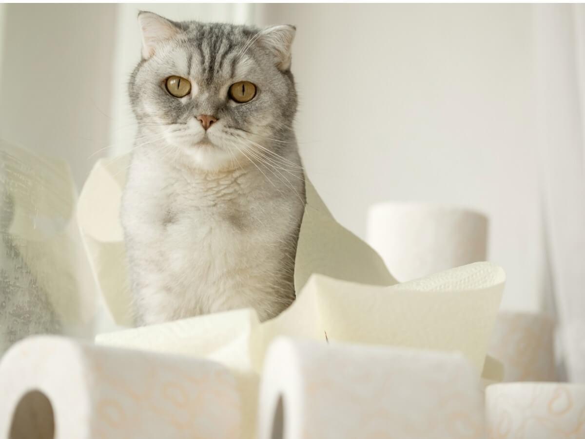 Un chat qui a la diarrhée.