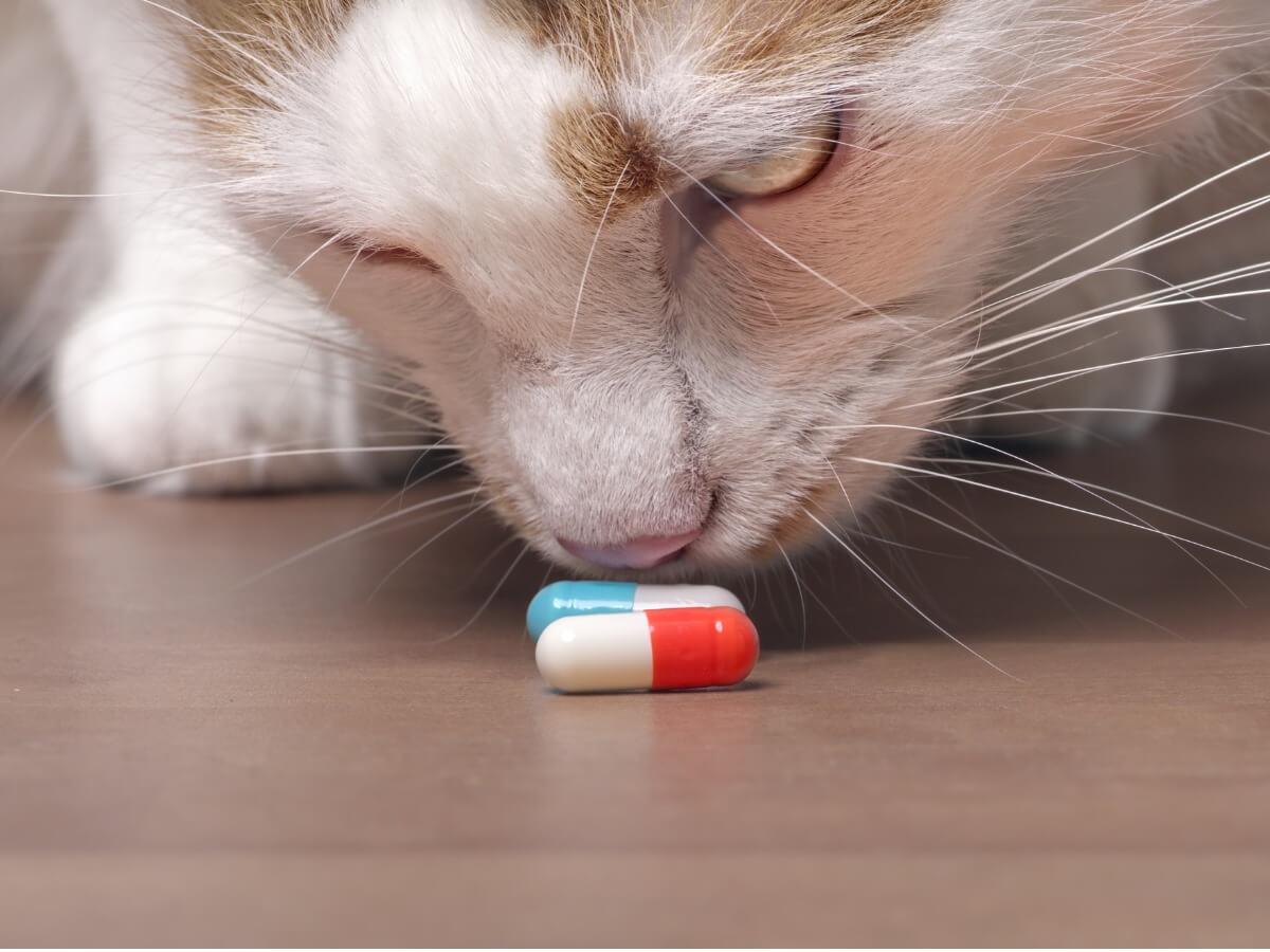 El Onsior para gatos puede ser muy útil.