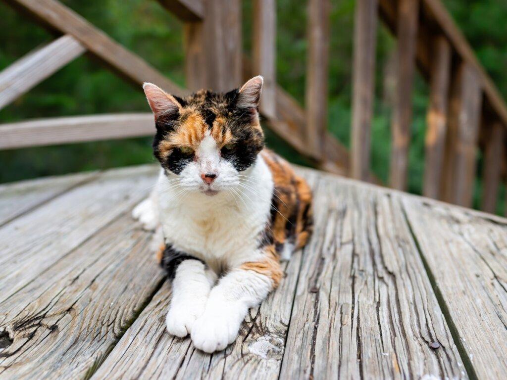Pérdida de peso en gatos: principales causas y tratamientos