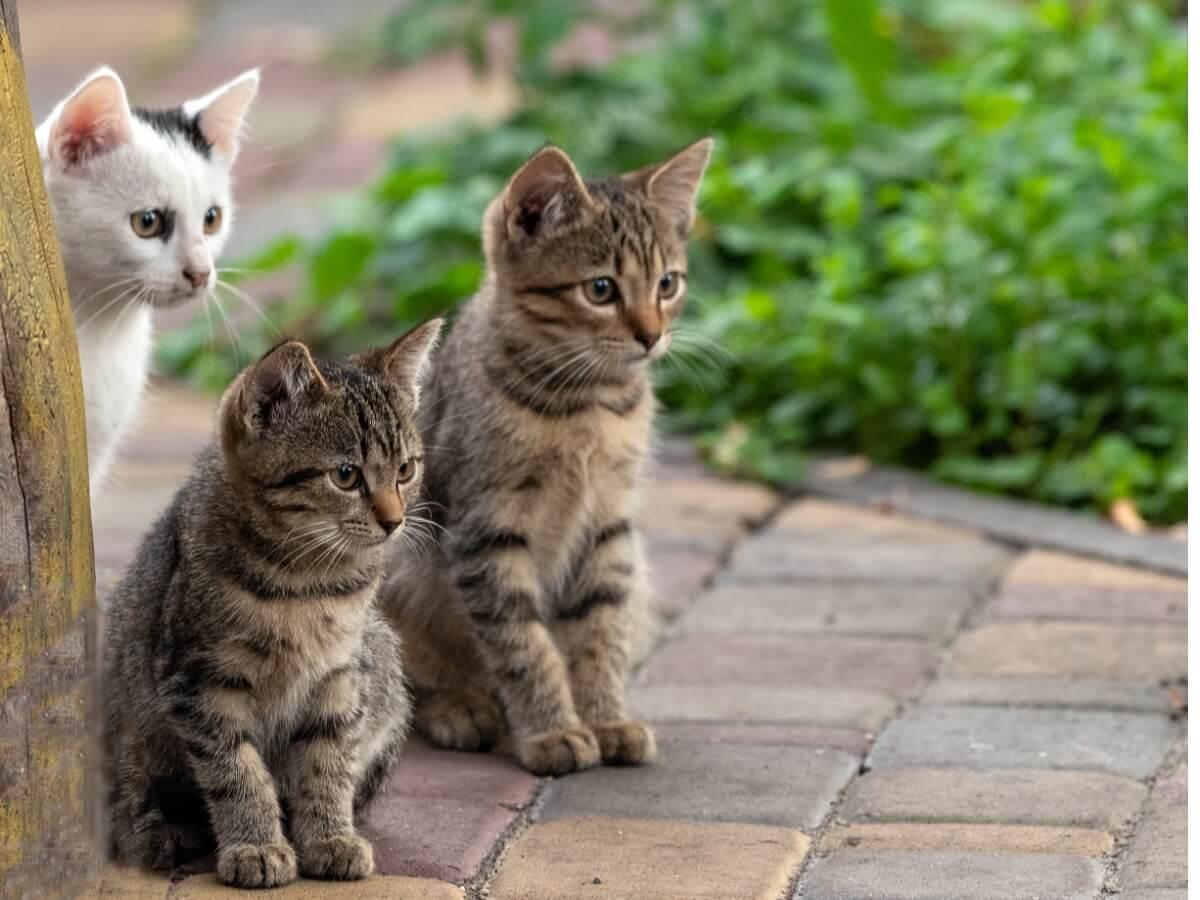 Un gruppo di gatti guarda la strada.