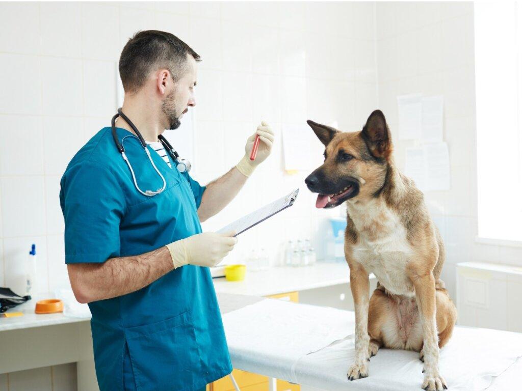 Hemodiálisis en perros y gatos: todo lo que necesitas saber