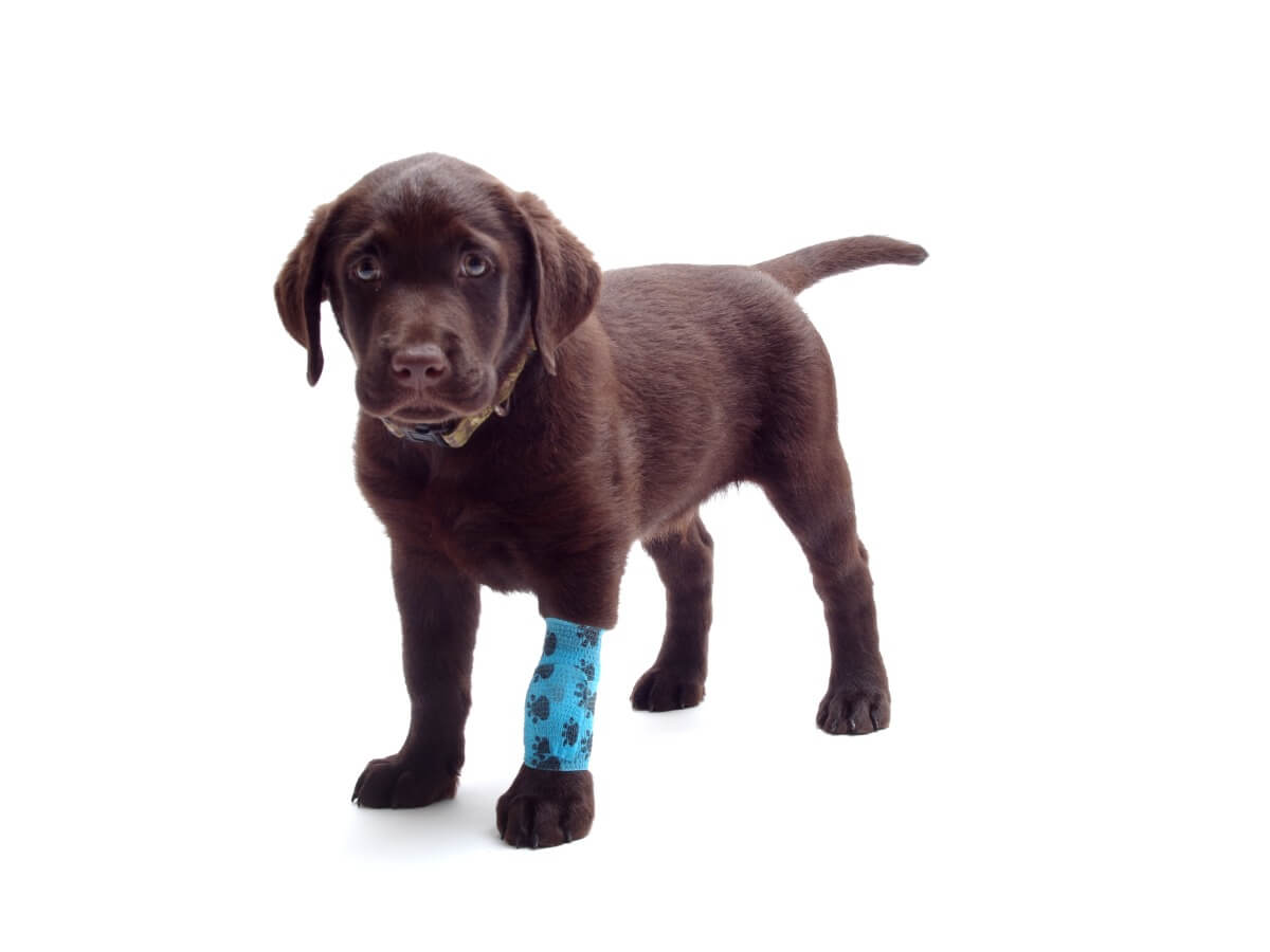 A specific case of sprain in dogs.