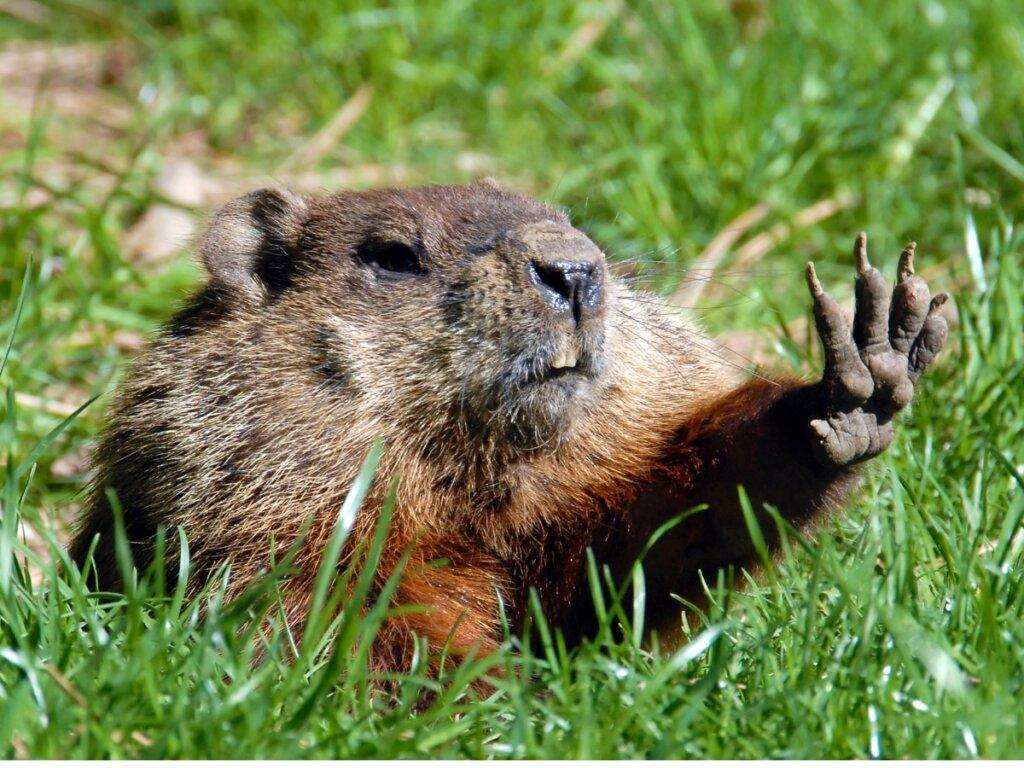 7 animales que viven en madrigueras