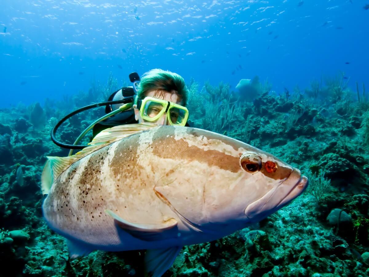 En stribet grouper på havbunden.