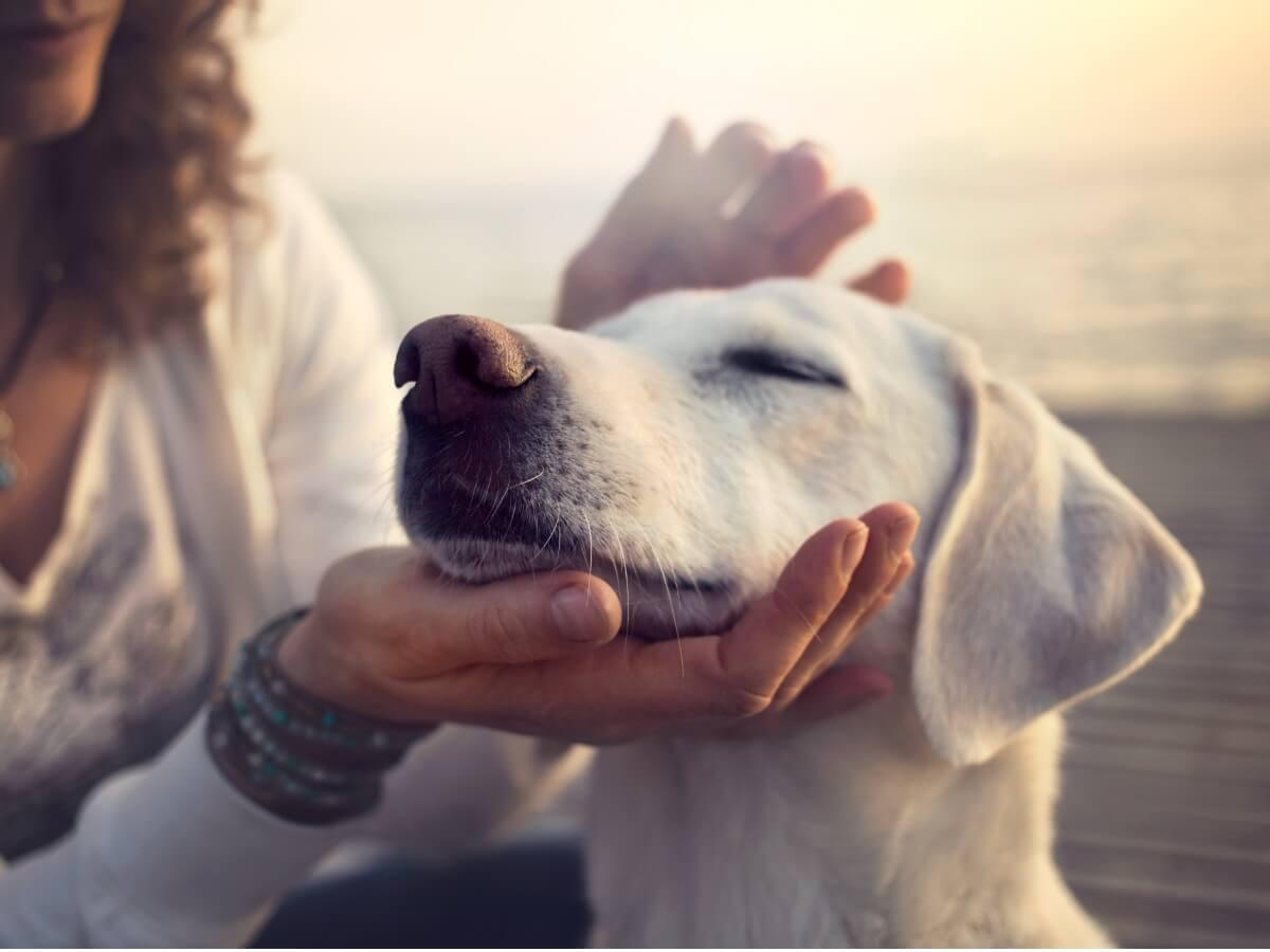 Une femme caresse son chien.