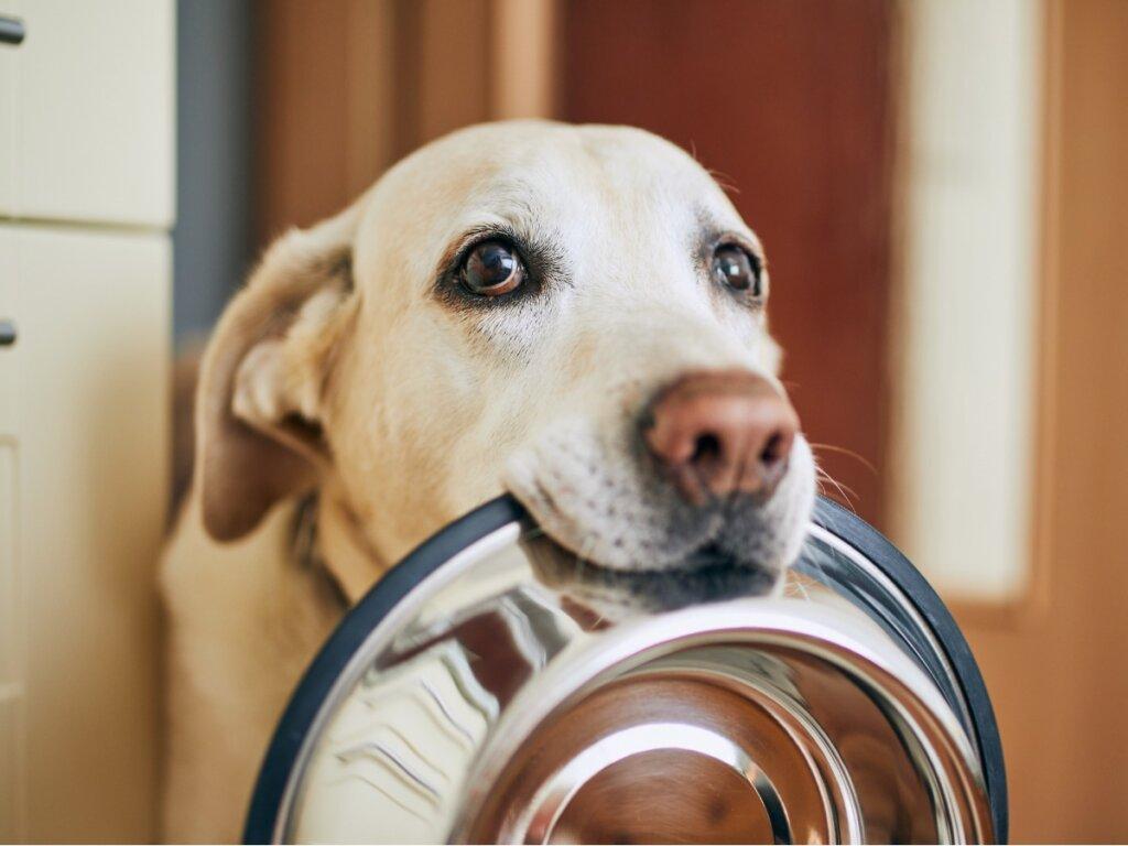 ¿Pueden comer kiwi los perros?