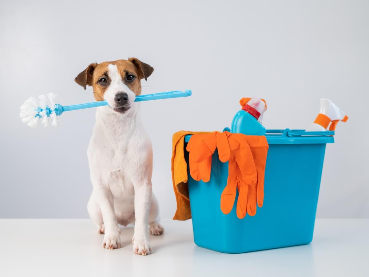 En hund i nærheden af badeprodukter