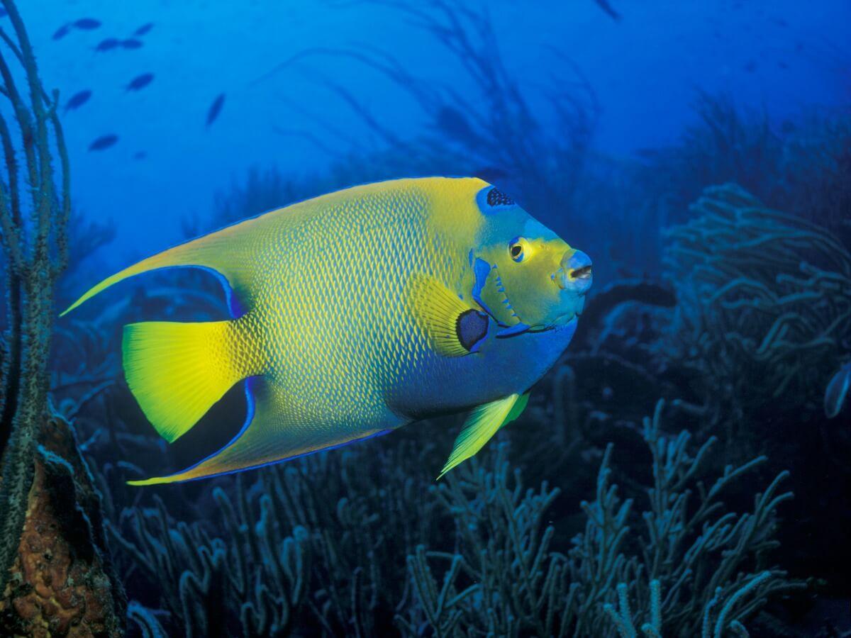 En havfisk på havbunden.